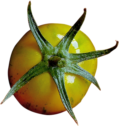 Tomate-almajara