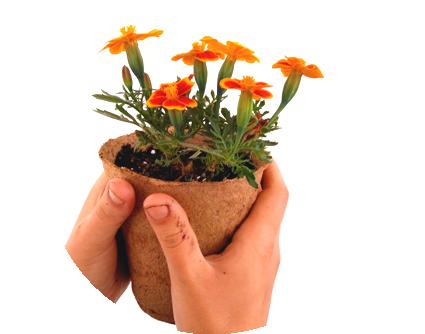 macetero_biodegradable